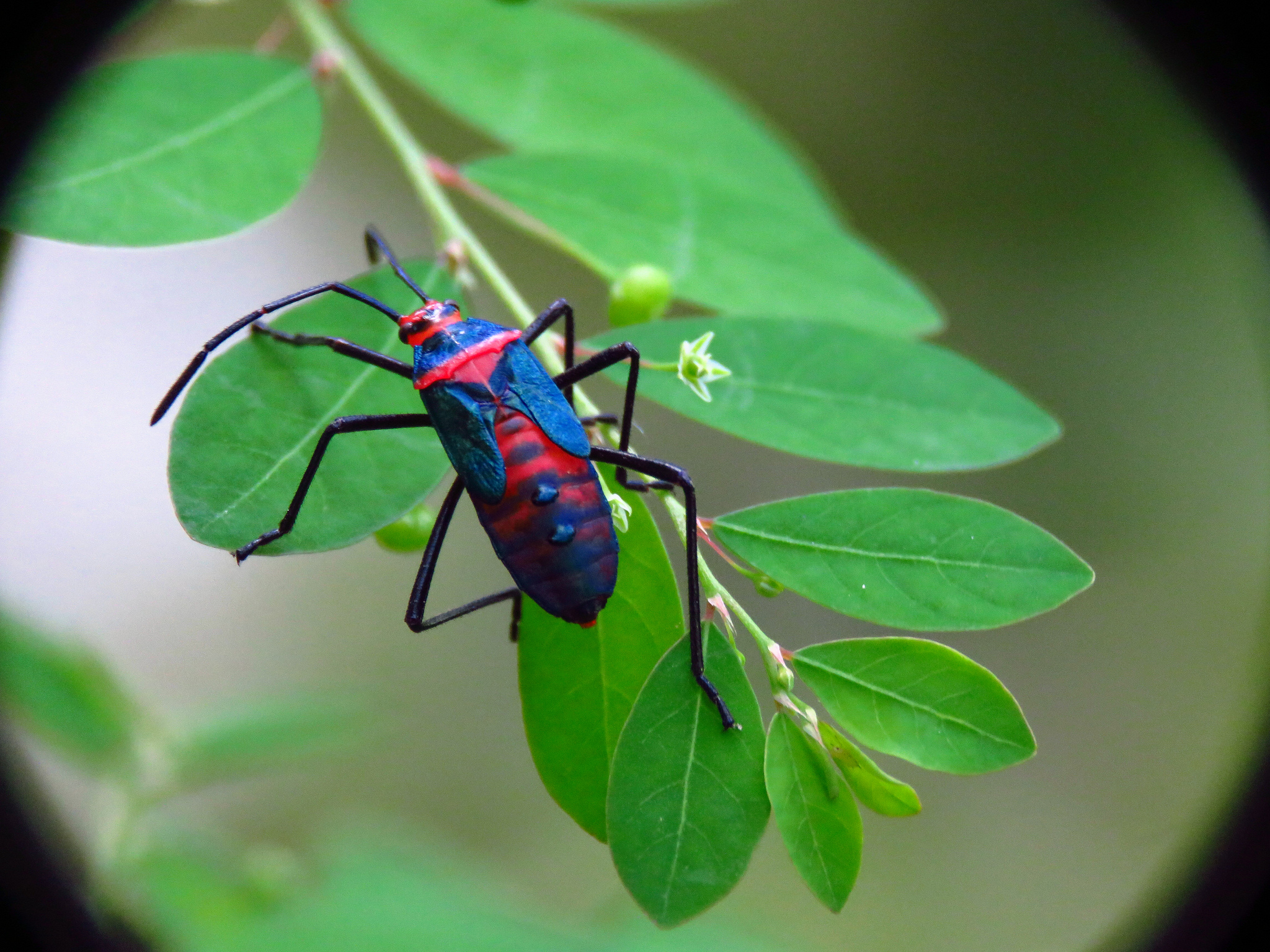Insects Types of